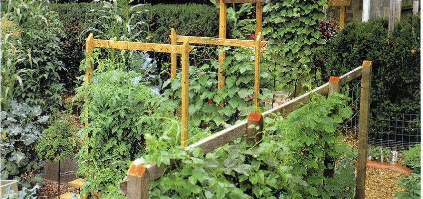 The Twenty-Minute Vegetable Garden in Far Hills