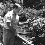 Edwin Toth in the Fragrance Garden, Colonial Park Arboretum and Rose Garden, Somerset County Park Commission
