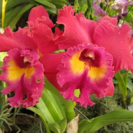 Mid-year Orchid and Garden Show