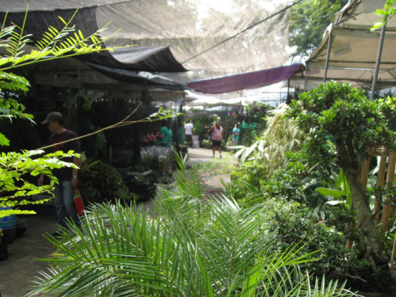 Orchid and Garden Show. Plant and Nursery Shops, 69th Mid-year Orchid and Garden Show