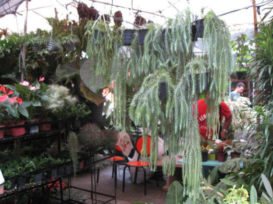 Plant and Nursery Shops, 69th Mid-year Orchid and Garden Show