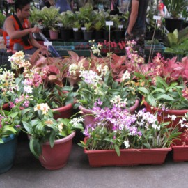 69th Orchid and Garden Show: Plant and Nursery Shops