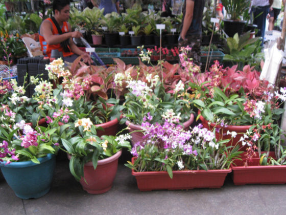 Orchids, Orchids! Plant and Nursery Shops, 69th Mid-year Orchid and Garden Show