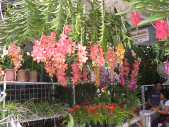 Vandas for sale. Plant and Nursery Shops, 69th Mid-year Orchid and Garden Show