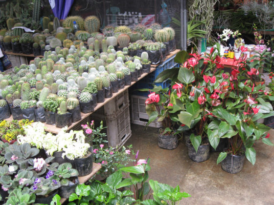 Cacti and Succulents, etc. Plant and Nursery Shops, 69th Mid-year Orchid and Garden Show