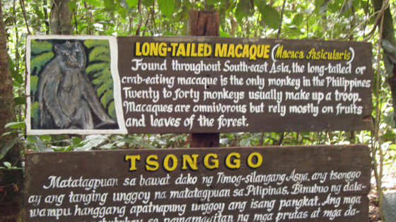 About the Macaques at Undrground River