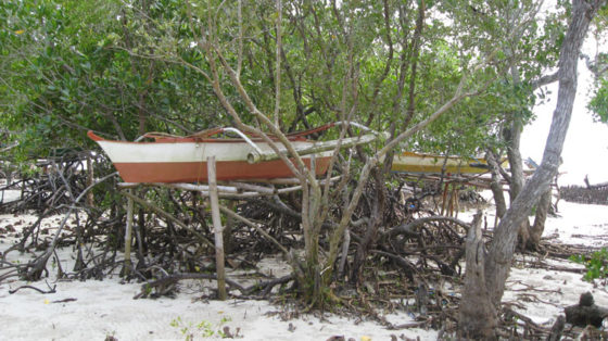 Sea Canoes stored on Mangrove Forest at Pristine Beach, Puerto Princesa, Palawan