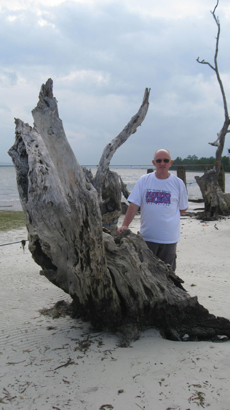 View of decaying ald Mangrove trunk at beach level, Pristine Beach, Puerto Princesa, Palawan