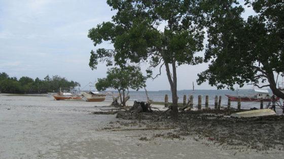 Mangrove Forest at Pristine Beach, Puerto Princesa, Palawan